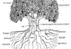 albero permacultura